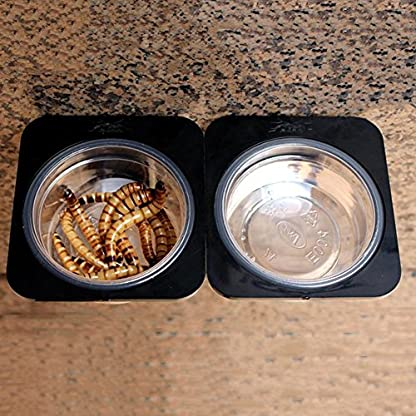 Double Grid Reptiles Food Water Feeding Bowl Insects Spider Breeding Tank Pots Suction Cup Gecko Feeder with 2 Bowls for… 6