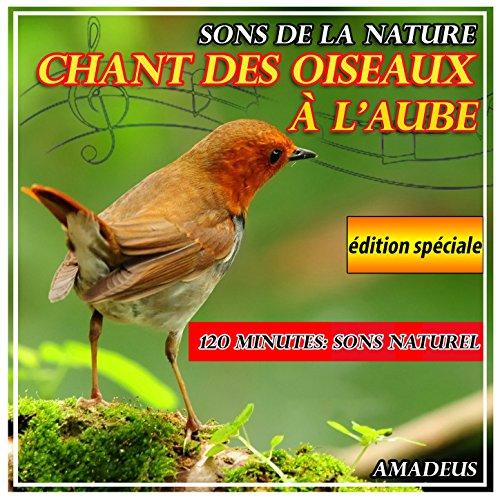 chant-des-oiseaux-a-laube-sons-de-la-nature