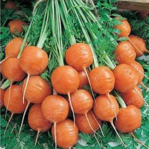 100pcs / sac carotte Semences Heirloom bio Graines Légumes Fruits très Graines ginseng long carotte Plante en pot pour jardin Gris foncé