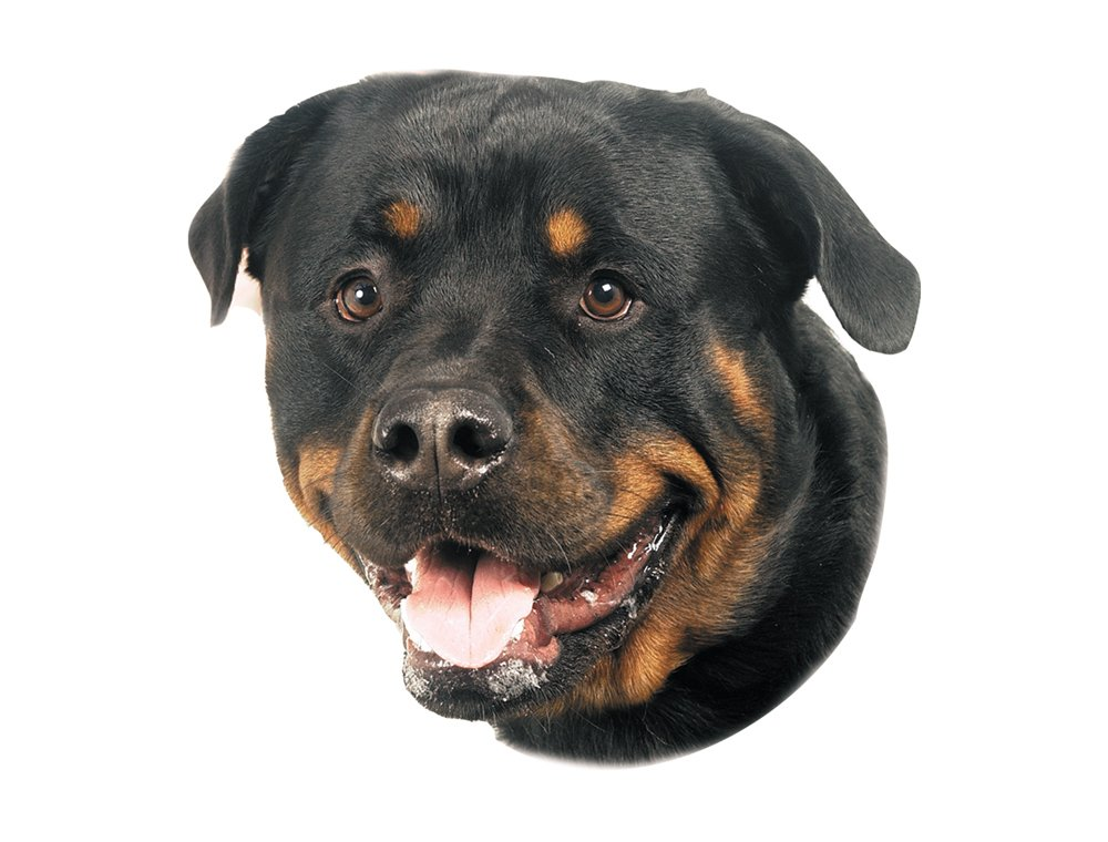 Nobby Sticker Rottweiler