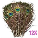 Yahee 12 X Pfauenfedern Pfau Federn f. Schmuck Deko 25-30cm lang Schmuck Federn Natur Karneval