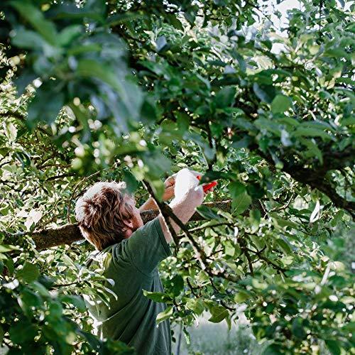 LÖWE Gartenschere, Amboss Schere gebogene Klinge, orange - 6