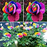 Rosepoem Beautiful 500Pcs Colorful Rainbow Rose Flower Seeds Yard Garden