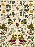 Kew Gardens Geschenkpapier-Heft - Motiv Früchte: 2 x 5 Bögen