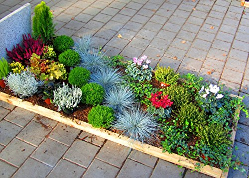 Grabbepflanzung Pflanzen-Set Einzelgrab 35 winterharte mehrjährige Pflanzen, Stauden, zur Grabgestaltung