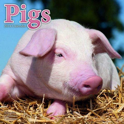 Pigs 2014 Calendar
