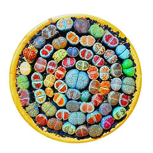 Decdeal 100 Stück Mischung Lithops Samen Lebende Steine Samen Sukkulenten Samen
