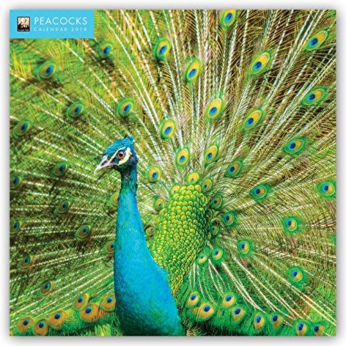 Peacocks - Pfauen 2018: Original Flame Tree Publishing-Kalender [Kalender] (Wall-Kalender)