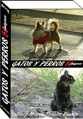 gatos y perros (50 imágenes)
