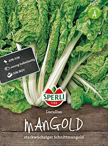 Mangoldsamen - Mangold Lucullus von Sperli-Samen