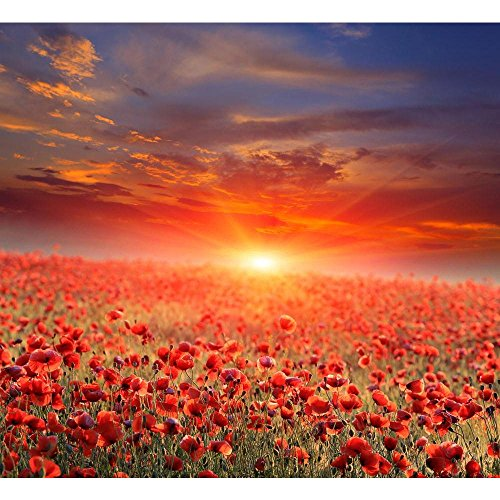 Pitaara Box Sunset Over Poppy Field Canvas Painting MDF Frame 19.8 X 18Inch -
