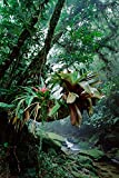 Fine Art Print – Bromelien wachsenden in Bäume auch Stream in bocaina National Park, Atlantic Forest, Brasilien von Bentley Global Arts Gruppe, canvas, multi, 10 x 16