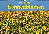 Ein Jahr lang Sonnenblumen (Wandkalender 2019 DIN A3 quer): Frisch fröhliche Sonnenblumen im Bild festgehalten von der Fotografin Anke van Wyk. (Geburtstagskalender, 14 Seiten ) (CALVENDO Natur)