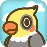 OX Bird