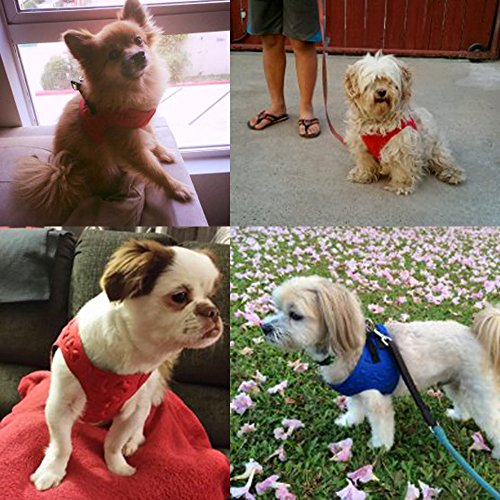 # 1 Rated Small Dog Harnesses by Comfort Fit Pets Our small dog harness vest has padded interior and exterior cushioning ensuring your dog is snug and comfortable Easy to Put on and Take off! - Red - S
