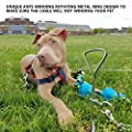 Dog Tie Out Cable Dog TieOut Stainless Stake, and 10 ft Complete Leash and Tether Spiral Tie-Out for Outdoor, Yard and Camping - Small to Medium Dogs by Greatjob