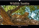 Wildlife Sambia (Wandkalender 2019 DIN A3 quer): Sambia mit seinen wunderschönen und tierreichen Nationalparks - ein Land für Natur- und Tierliebhaber. (Monatskalender, 14 Seiten ) (CALVENDO Tiere) - Photo4emotion.com
