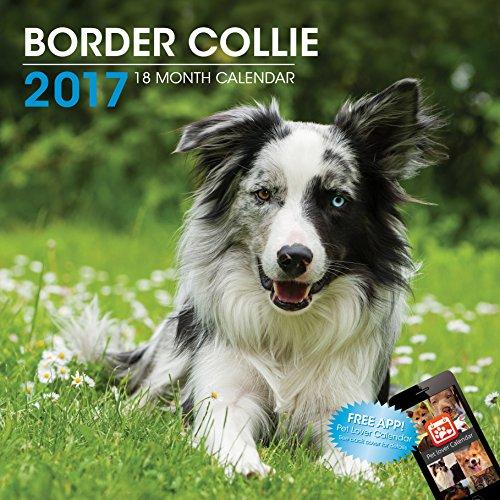 littlegifts-border-collie-2017-calendar-3049