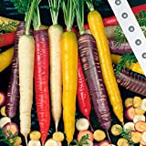 Keland Garten - Rarität Bio Sommermöhre 'Rainbow Mix F1' Gemüsesamen Saatgut Garten winterhart mehrjährig