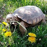 Tortoise Food Flower Mixture Seeds