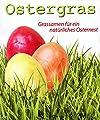 Samen für OSTERGRAS (Phleum pratense L. / 30 g) EIGNET SICH FÜR KLEINTIERE von Heitmann - Du und dein Garten