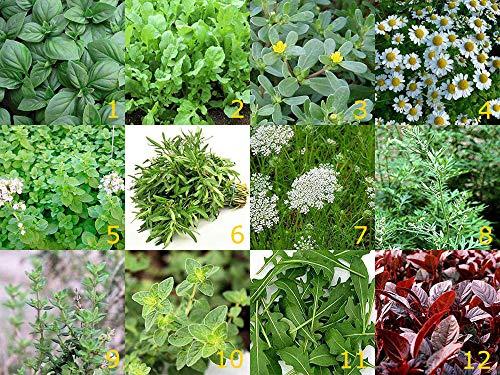 12 Arten - Schönes Kräuter Set - 12 Tütchen - 12000 Samen (Samen Wild-kräuter)