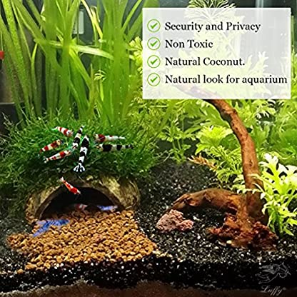 SunGrow Coco Shrimp Cave, 5x3 Inches, Coco Hut, Comfortable Hideout for Crustaceans, Perfect Breeding Area, Promotes… 3