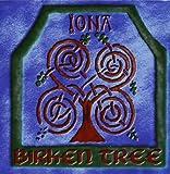 Birken Tree - Iona