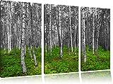 kleiner ansehnlicher Birkenwald schwarz/weiß 3-Teiler Leinwandbild 120x80 Bild auf Leinwand, XXL riesige Bilder fertig gerahmt mit Keilrahmen, Kunstdruck auf Wandbild mit Rahmen, günstiger als Gemälde oder Ölbild, kein Poster oder Plakat