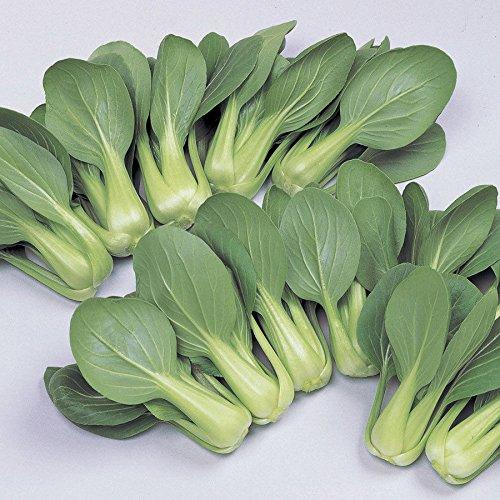 200 - Seeds: Li Ren Choy Hybrid Pak Choi Seeds - Großes frisches Essen der ganze Saison !!!!!! -