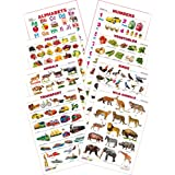 SPECTRUM Kid'S 1St Learning Charts [S] : Set 13 (English Alphabets, Numbers 1 To 10, Animals, Birds, Fruits, Vegetables, Transport & Wild Animals)