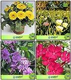 BloomGreen Co. Garten Pflanzensamen Combo Baumsamen: Pride Of India, Nerium Oleander, Calendula- Gelb, Burf-Gelb-Blumensamen Küche Garten-Pack