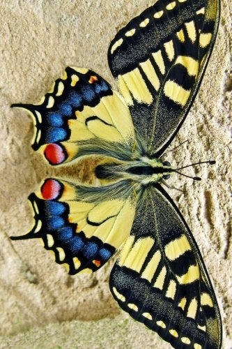 beautiful-yellow-swallow-tail-butterfly-for-the-love-of-nature-blank-150-page-lined-journal-for-your