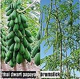 SHOP 360 Thai Papaya Dwarf Variety, Drumstick/Sajna/Moringa Oleifera Seeds (20 Seeds Each)
