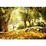 Fototapete Wald - ALLE WALDMOTIVE auf einen Blick ! Vlies PREMIUM PLUS - 200x140 cm - SUMMER TREES - Wald Sonne Steine - no. 265