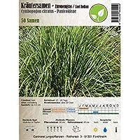 Semillas de hierbas - De limón / East India - Cymbopogon citratus - Panicoideae 50 semillas