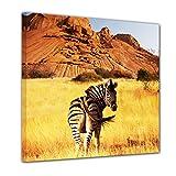 Bilderdepot24 Immagine su Telaio a Cunei Zebra di Montagna 100x100 cm - già Montato sul Telaio, Stampa su Tela di Cotone 100%, Stampa Artistica intelaiata e pronta da Appendere