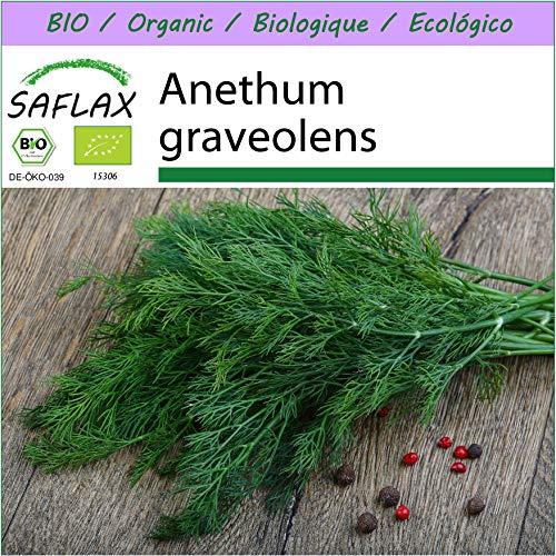 SAFLAX - BIO - Dill - 700 Samen - Anethum graveolens