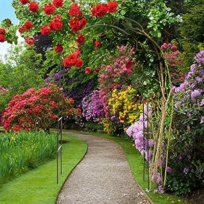 Relaxdays 10018871 Rosenbogen Metall pulverbeschichteter Stahl für Kletterpflanzen von Relaxdays auf Du und dein Garten