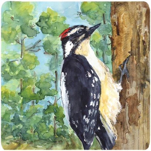 juego-de-4-del-pajaro-downy-woodpecker-practicos-de-costa-de-la-espuma