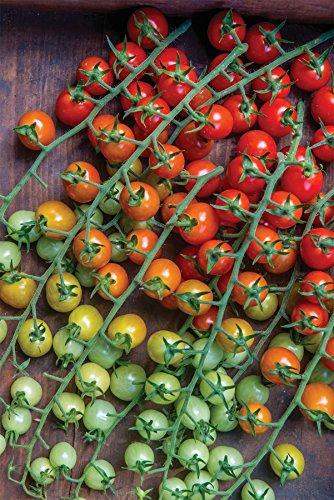 Erreichen Original Arme (JustSeed Gemuse Tomaten Cherry Baby 10 Samen)
