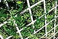 Catral Deutschland Rankgitter PVC ausziehbar 0 von Catral Garden & Home, S.L. bei Gartenmöbel von Du und Dein Garten