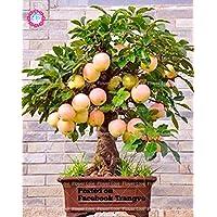 suchergebnis auf f r zwergbaum obst garten balkonpflanzen garten. Black Bedroom Furniture Sets. Home Design Ideas