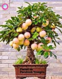 30PCS Bonsai-Baum-Samen Zwergbaum Super Sweet Bio-Fruchtsamen Staudentopfpflanze Zimmerpflanze