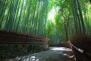 Ungarischer Riesenbambus, Bambus pubescens, wächst 30-50 cm pro Tag, -20 Grad !!