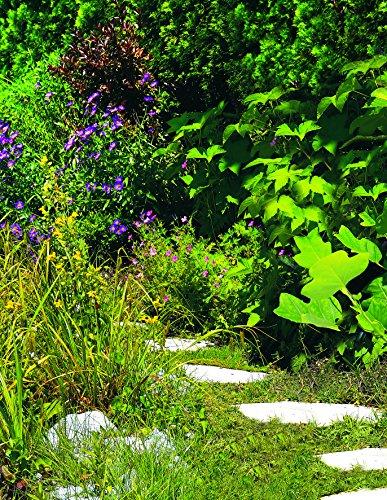 Einhell Akku Gras und Strauchschere GC-CG 3,6 Li WT - 8