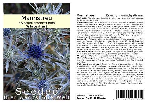 Seedeo® Mannstreu (Eryngium amethystinum) 30 Samen