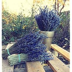 Lavanda ramo flores secas tallos para boda fiesta hogar decoración buen regalo ideal 100pcs