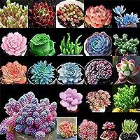 Suculentas Semillas de Cactus Semillas de Plantas Semillas de Flores para la Sala Semillas de Plantas de Jardín de Hogar 100 Unids/bolsa