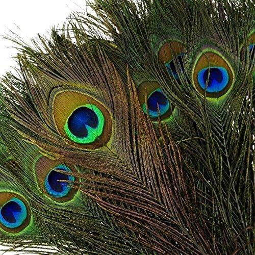 Hosaire 100 Stück/set Pfauenfedern,15-20 cm Länge Natürliche Federn für Hochzeit Dekoration Haus Dekoration DIY Pfauen Federn Kleidung Zubehör